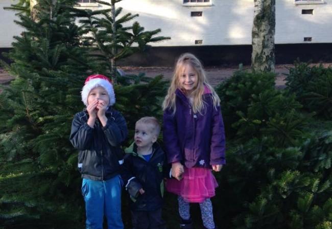 Årets juletræ er kommet i hus