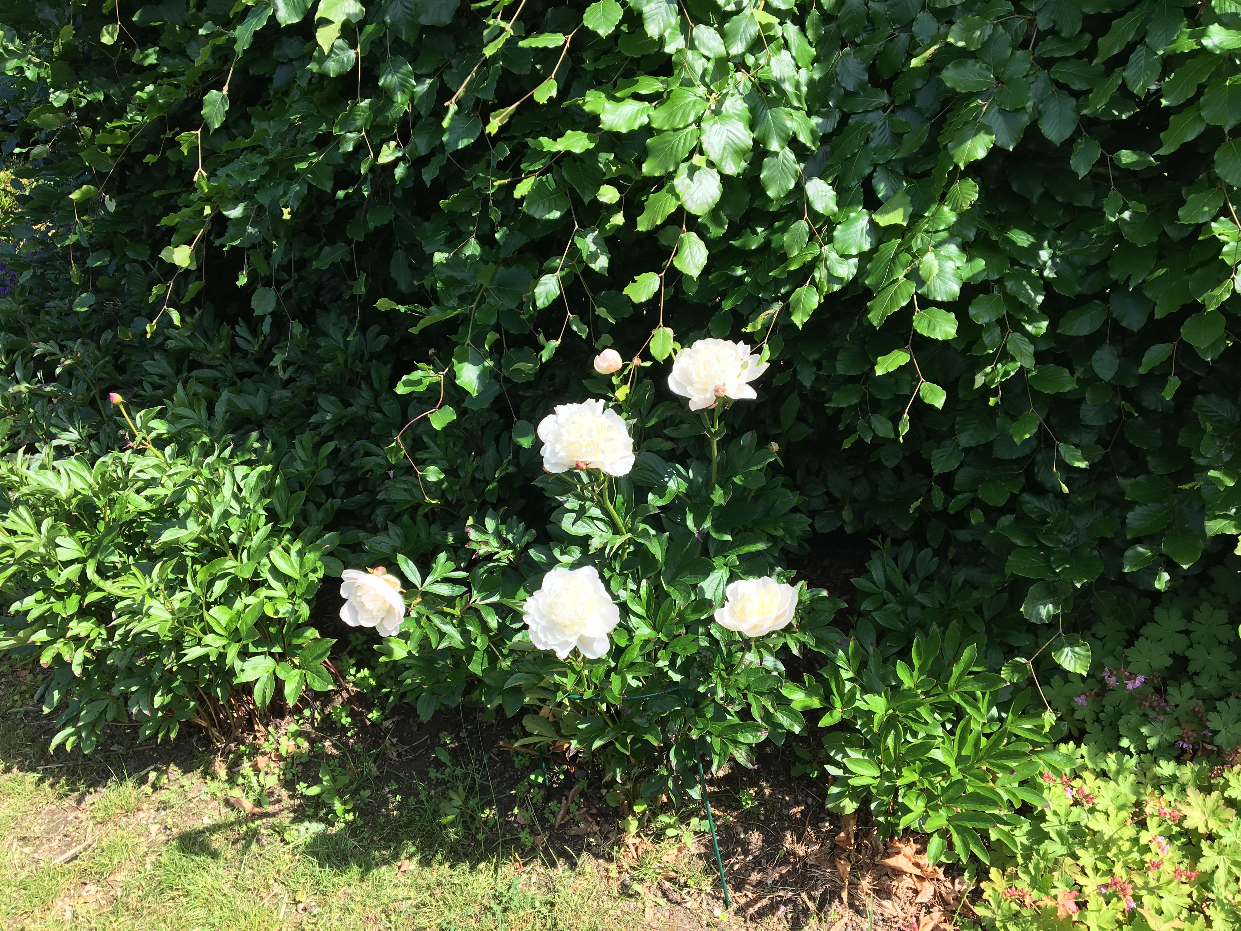 Friske billeder fra haven